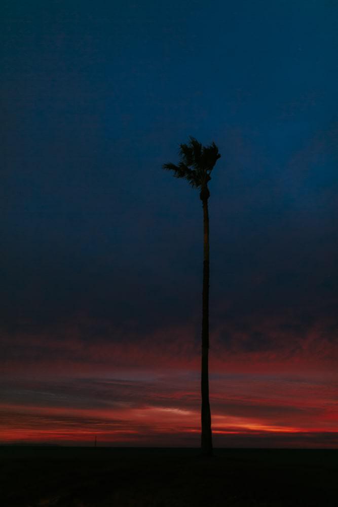 photo palmier au coucher de soleil en Californie